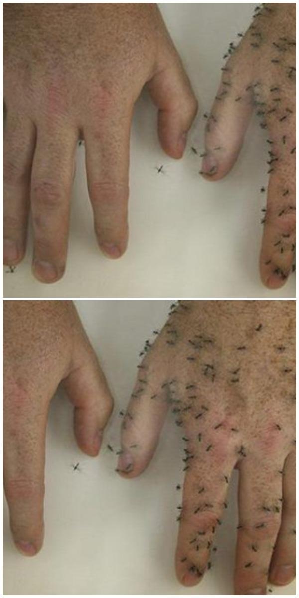 Эффективное домашнее средство от комаров