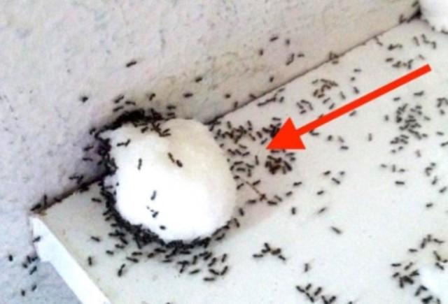 Всего лишь 1 ингредиент – и вы больше никогда не увидите блох, тараканов и муравьев.