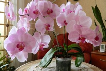 Что делать, если не цветет орхидея: советы цветоводов 1