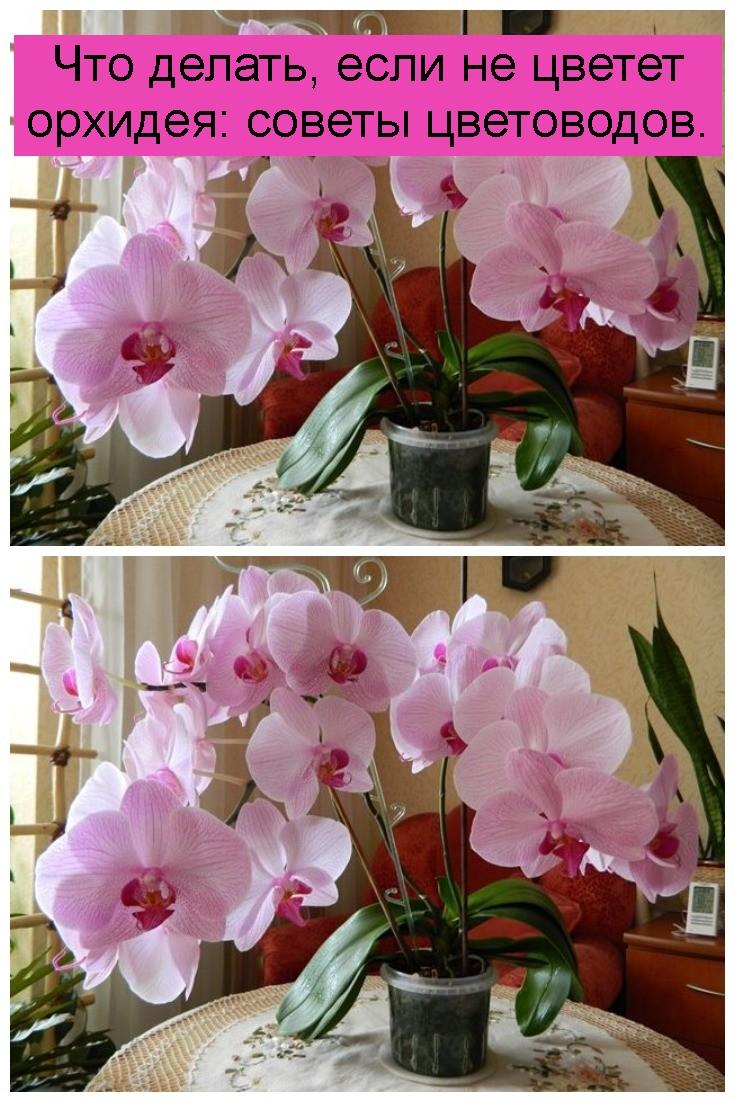 Что делать, если не цветет орхидея: советы цветоводов 4