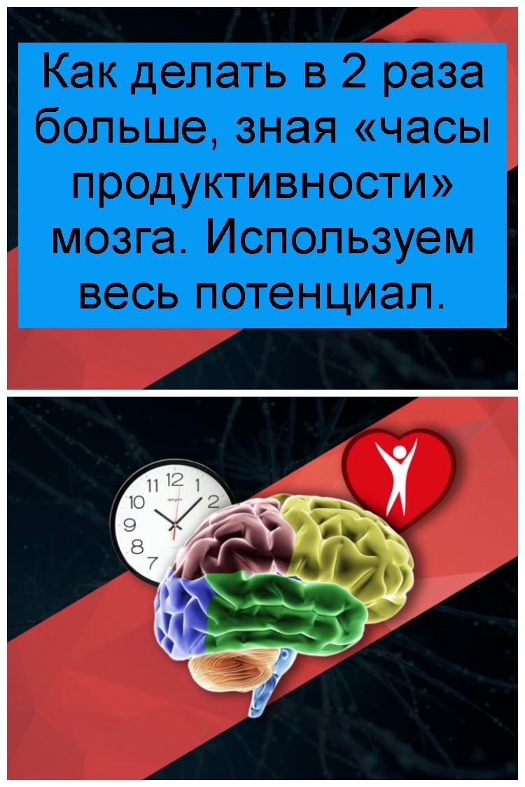 Как делать в 2 раза больше, зная «часы продуктивности» мозга. Используем весь потенциал 4