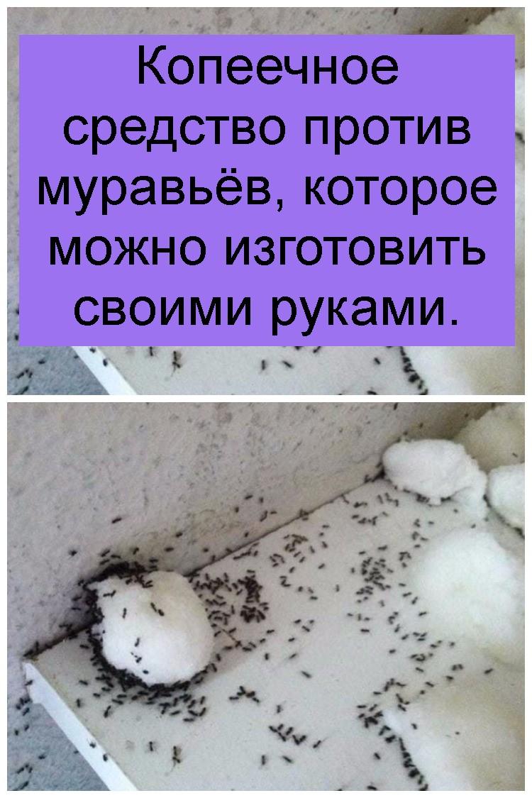 Копеечное средство против муравьёв, которое можно изготовить своими руками 4
