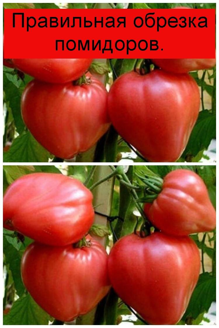 Правильная обрезка помидоров 4