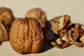 Удивительные свойства оболочек грецкого ореха 1